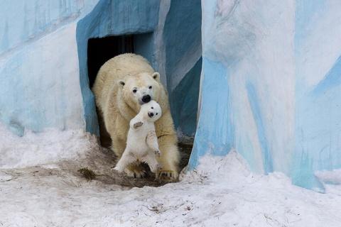 Эти животные научат вас, как быть хорошим родителем