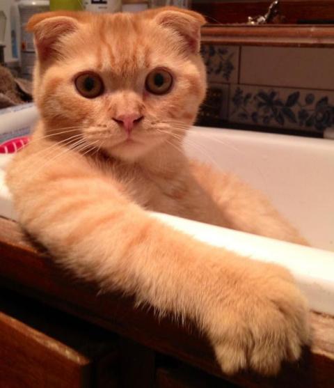 И кто сказал, что кошки не л…