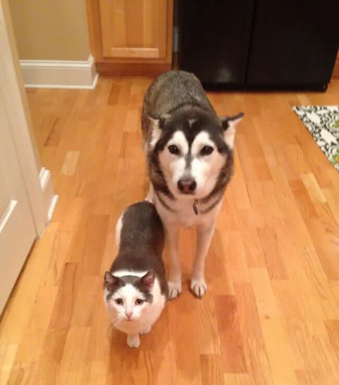 Умилительные пары животных, …