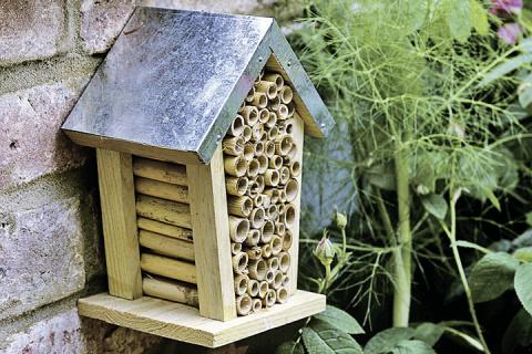 Как защитить сады от вредителей можно при помощи насекомых