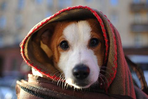 Ночь с четверга на пятницу станет в Москве самой холодной за всю зиму