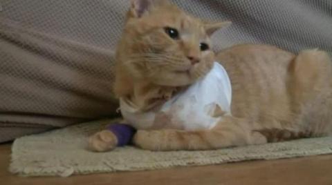 Кот спас жизнь юного хозяина…