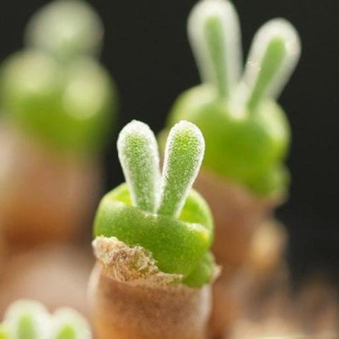 Как вырастить кролика на под…