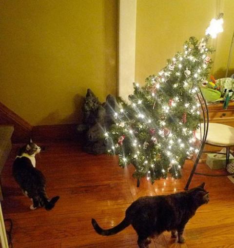 Разрушители новогоднего наст…