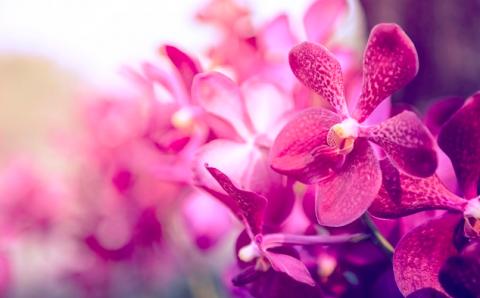 Секреты ухода за орхидеями от цветовода Нелли Мурашкиной