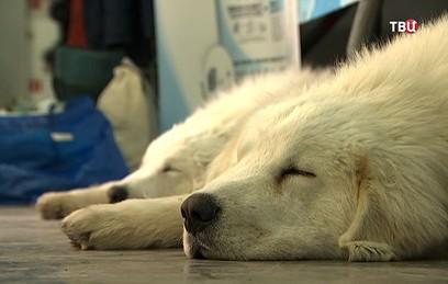 Выставка собак в Москве прош…