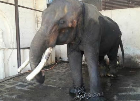 История о слоне, которые про…