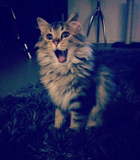 15 доказательств, что коты у…