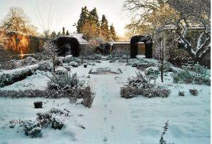 Чем заняться садоводу зимой? Вырастить апельсин из косточки