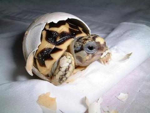 Интересные факты об удивительных, милых и очаровательных черепахах