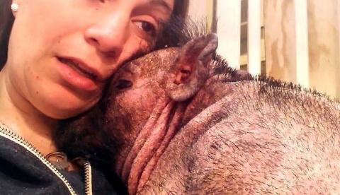 Вы до сих пор думаете, что свиньи это бесчувственные животные?