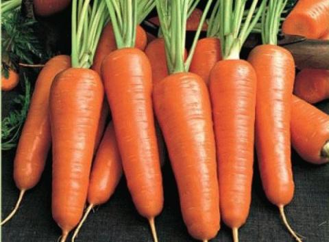 Посадка моркови под зиму – ранний урожай обеспечен