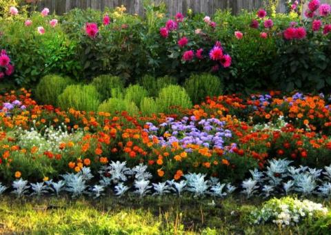 Какие цветы надо сажать на рассаду в январе-феврале. Супер-идея выращивания огурцов в бочке!