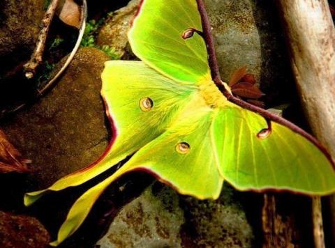 Потрясающе красивые насекомые