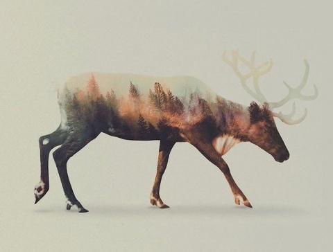 Дикие животные и местность в одном снимке