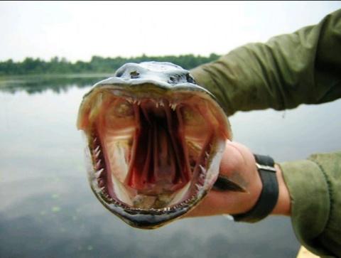 74. Рыбалка на селегере