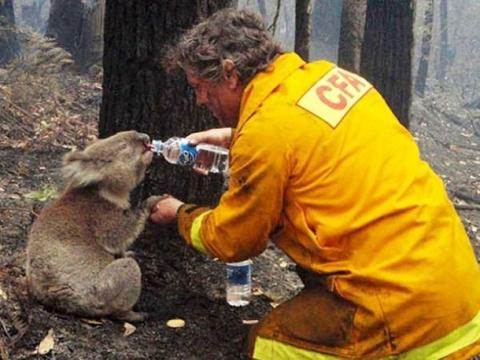 Истории о спасенных животных…