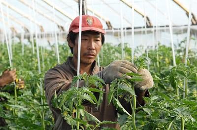 Китайский овощевод: «Скажите…
