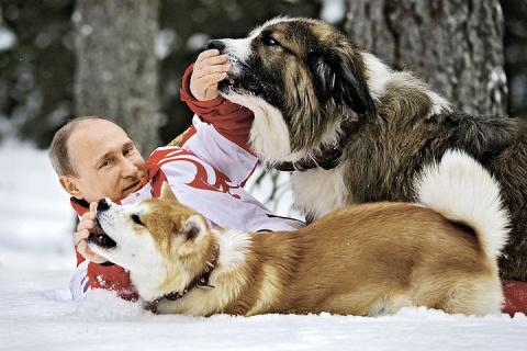 Порода собак Алабай: стоит л…
