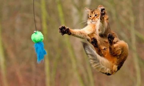 Котики, которые учатся прыга…