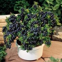 Домашнее садоводство – 6 рас…