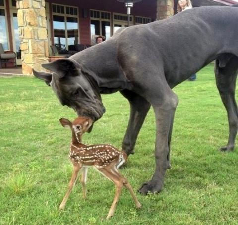 Не грустите! Эти животные напомнят вам, что мир все-таки прекрасен