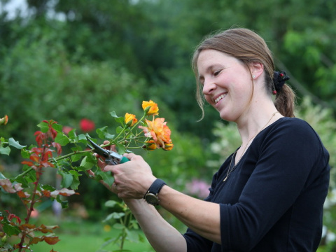 Правила обрезки роз весной, летом и осенью