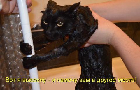"""Кот говорит : """"Я бык!""""))"""