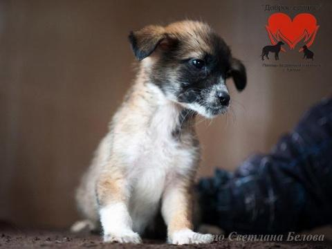 В тамбовском приюте выходили заморенного голодом щенка