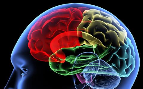 Левое полушарие мозга важнее…