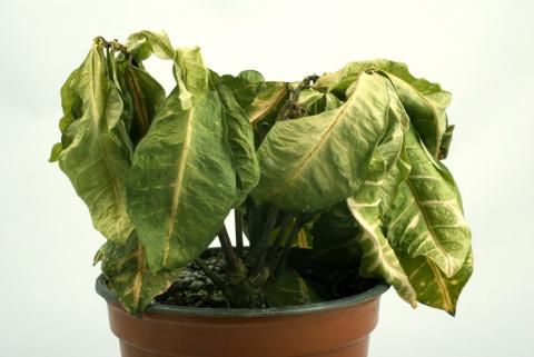 Почему не растут комнатные растения?