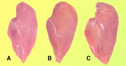 В каком случае куриная грудка может навредить здоровью