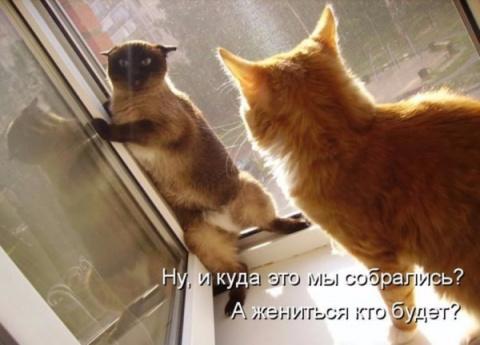 Позитивные котоматрицы))