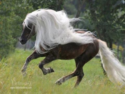 Красота лошадей от Михалыча