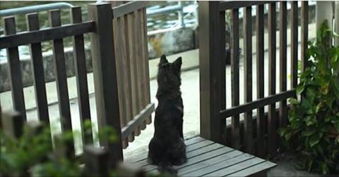 Каждый день этот пес одиноко…