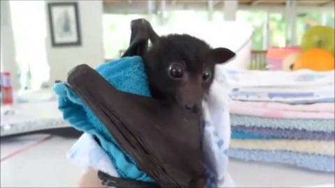 Прикольное видео с Коуб - Август #7 2017