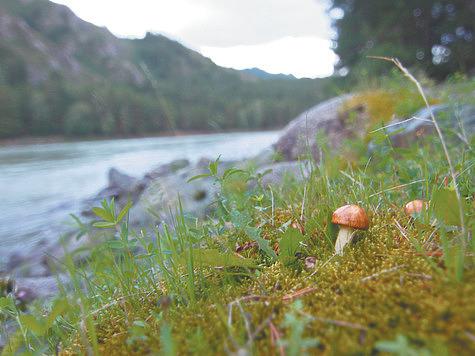 Собираем грибы в горах