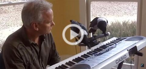 Вороны умные птицы и имеют музыкальный слух