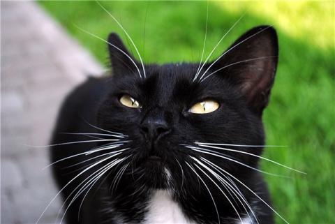 Мама Муся: кошка усыновила в…