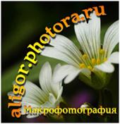 макрофотография