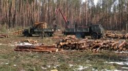 Варварская вырубка лесов на …