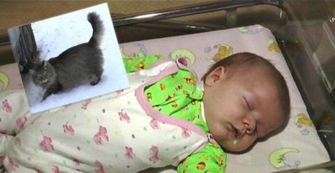 Кошка заметила ребенка, брош…