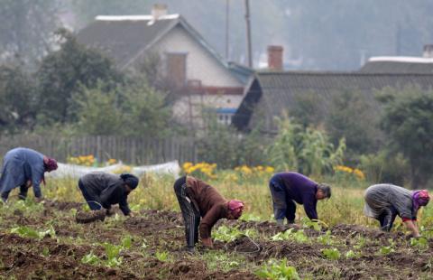 Во сколько обходится выращивание домашней картошки?