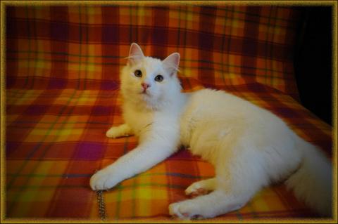 Необыкновенно приятное существо кошачьего рода!!!