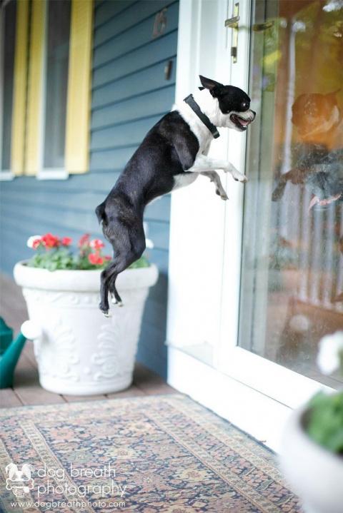 Выразительные и причудливые портреты собак Кейли Грира