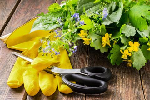 Удобрение из крапивы, чистотел от кротов и еще много советов