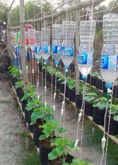 Прекрасная идея полива при выращивании огурцов!
