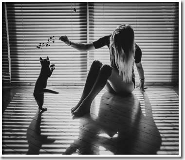 Любовь к кошкам часто сочета…
