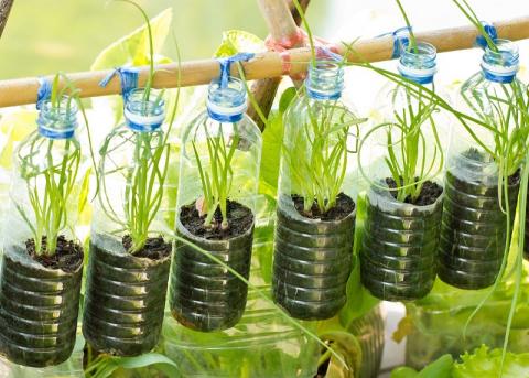 Овощи можно выращивать не на грядке, а в… бутылке! Устройте шикарный огород на балконе