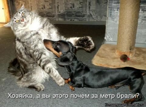 Большая подборка котоматриц …